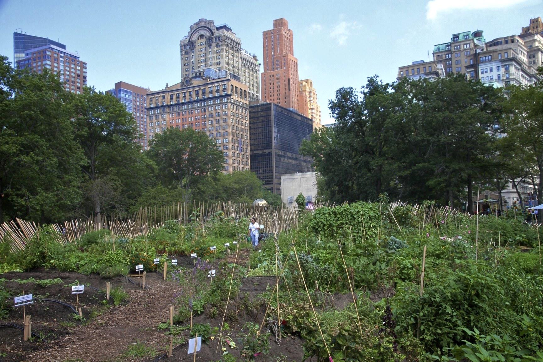 Figure 7: Urban farming in Detroit. (Photo via 8thnbee.com)