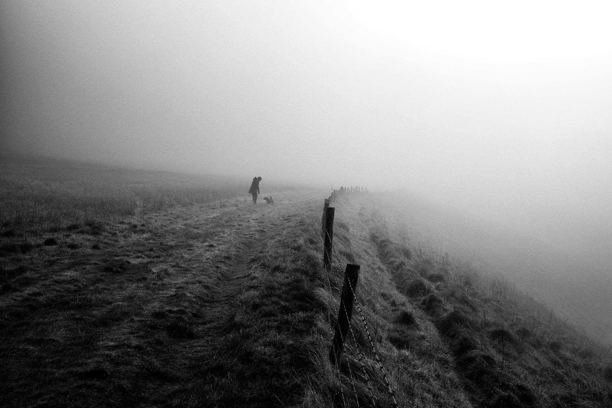 Oscar in the early morning mist