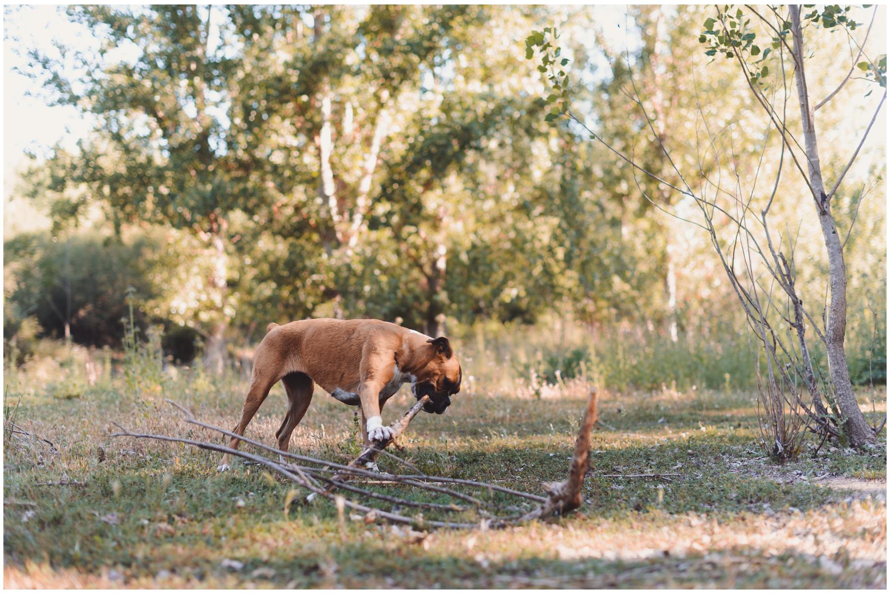 Nala-Retrato-Mascotas-Perros_Jose-Angel-Fotografia-191.jpg