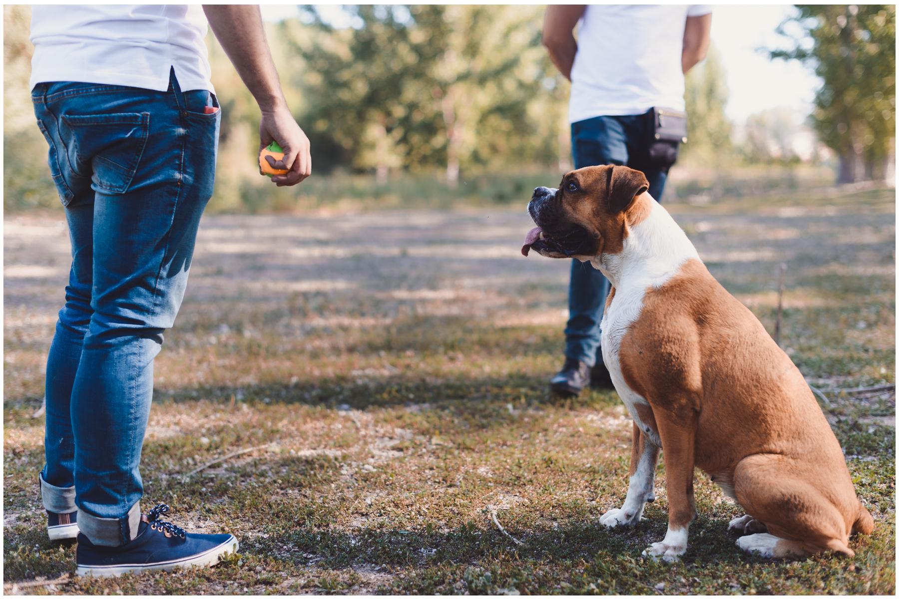 Nala-Retrato-Mascotas-Perros_Jose-Angel-Fotografia-231.jpg
