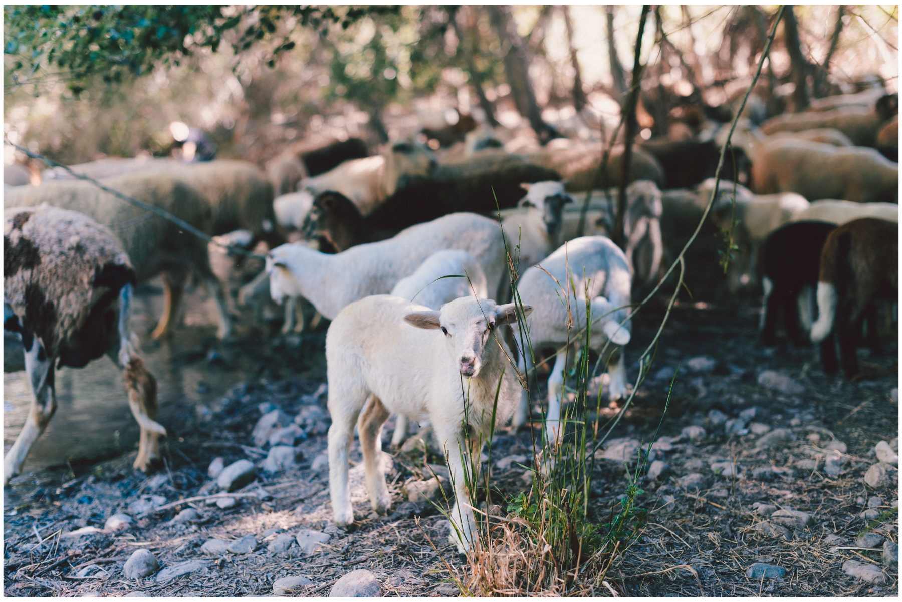 Nala-Retrato-Mascotas-Perros_Jose-Angel-Fotografia-374.jpg