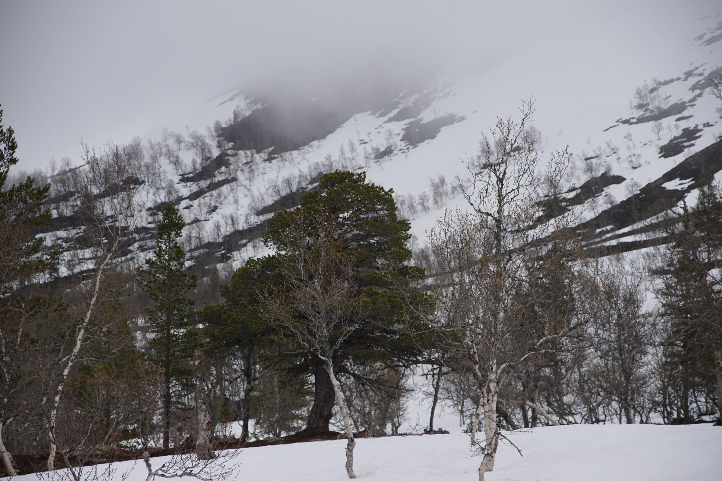 - En tur i fjellskogen, gir fred i sjelen -