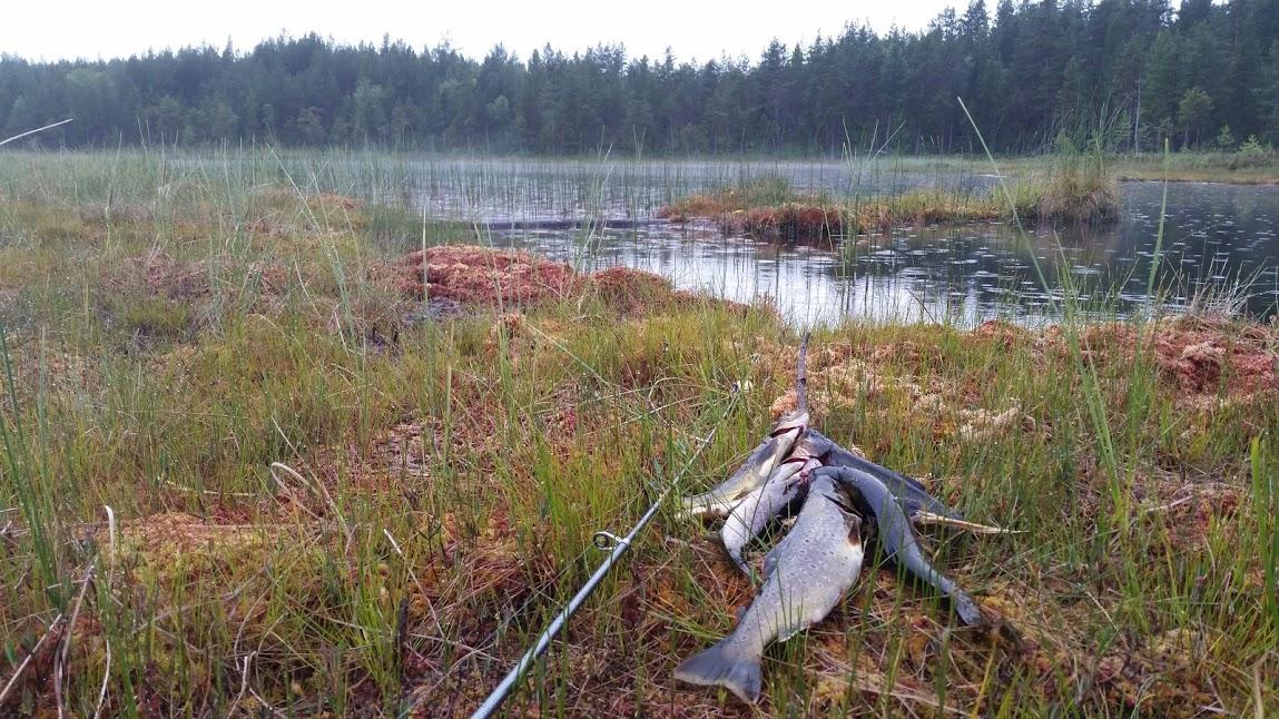 Fiske fronningen 20170711_211559.jpg