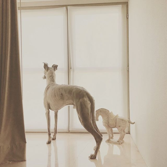 """""""Everything comes to you at the right time. Be patient."""" #ezsilva #quote #quotesaboutlife #whippet #whippetlove #whippetlovers #pet #dog #artist"""
