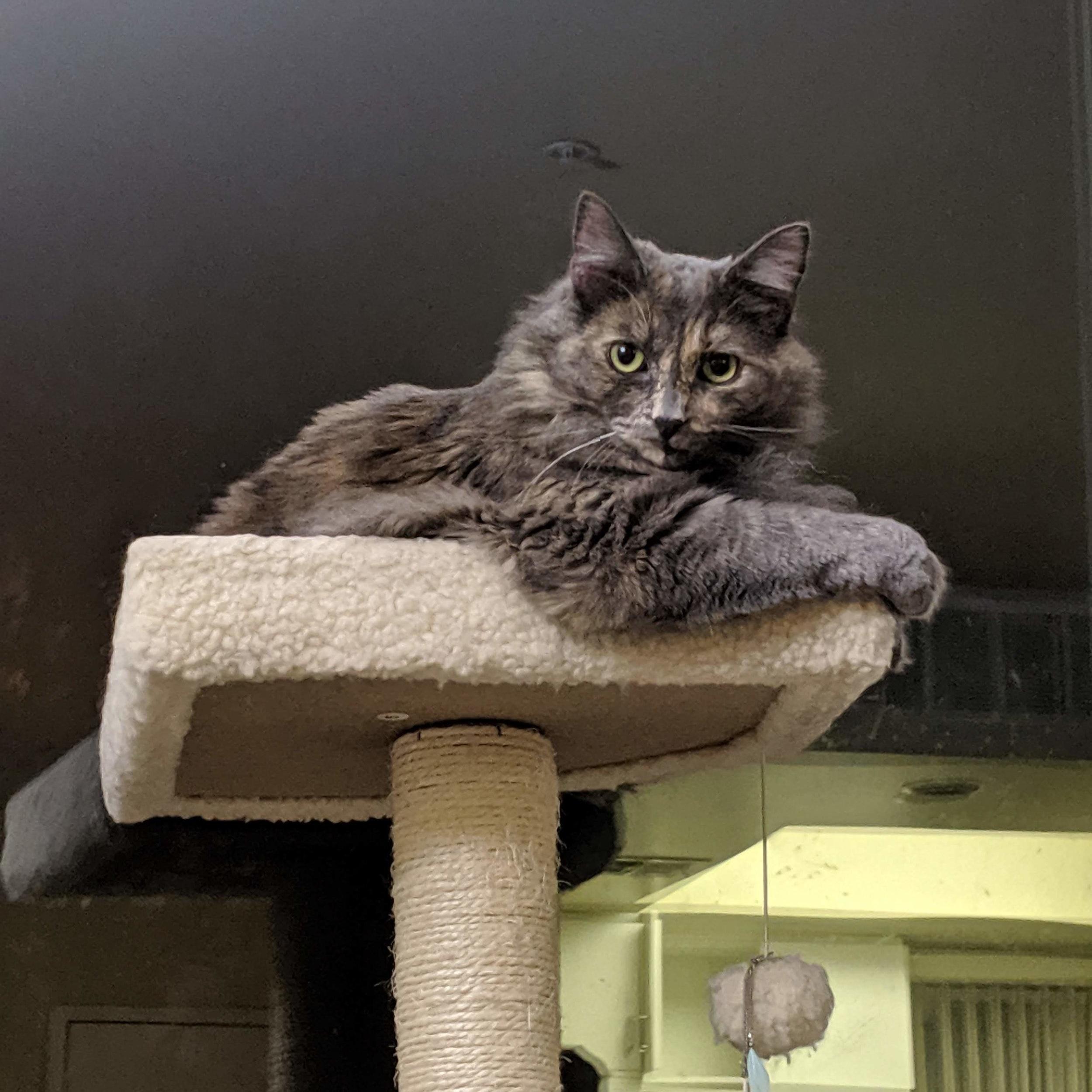 Comet Cat  Cat