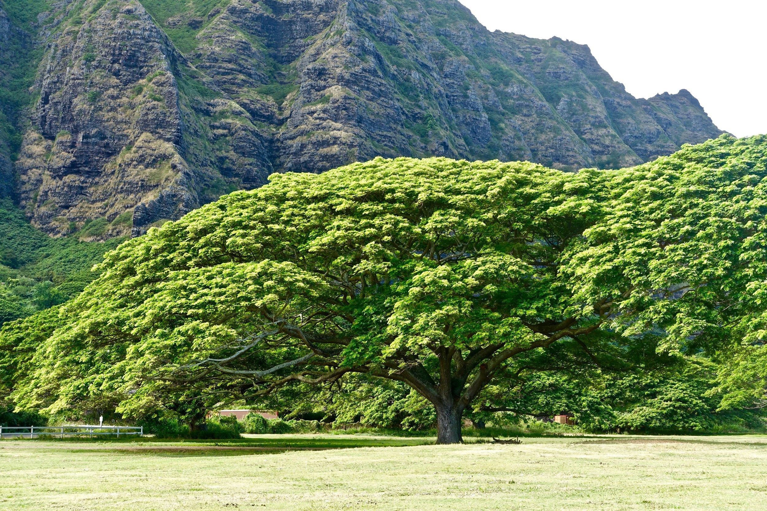 tree-2247974.jpg