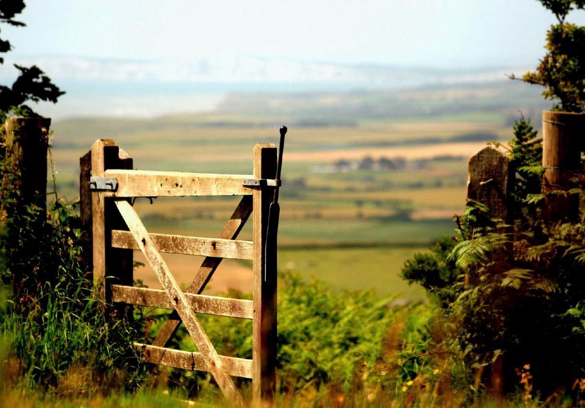 meadow-gate.jpeg