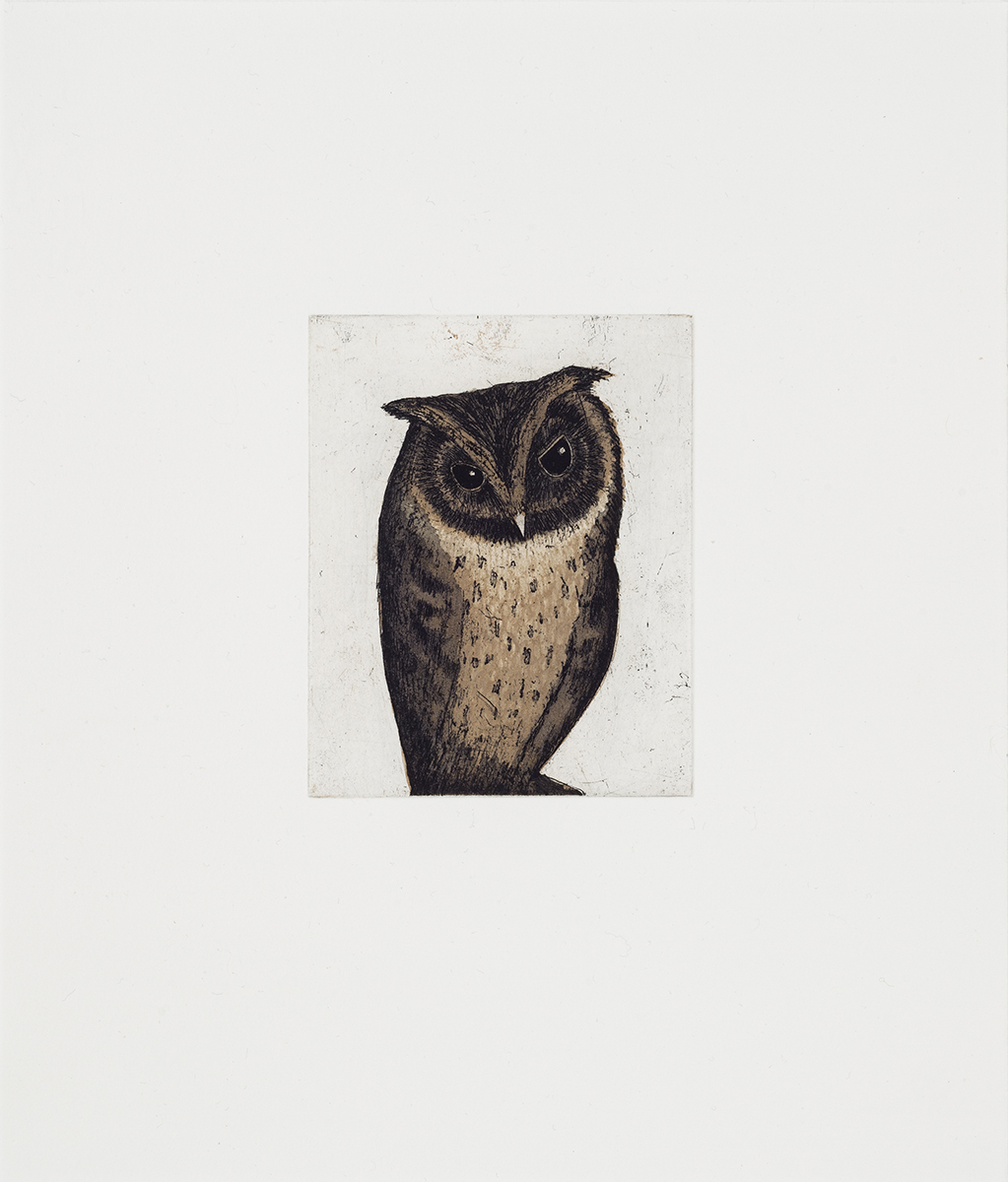 "Little owl , three color etching, 4"" x 5"" 2014"