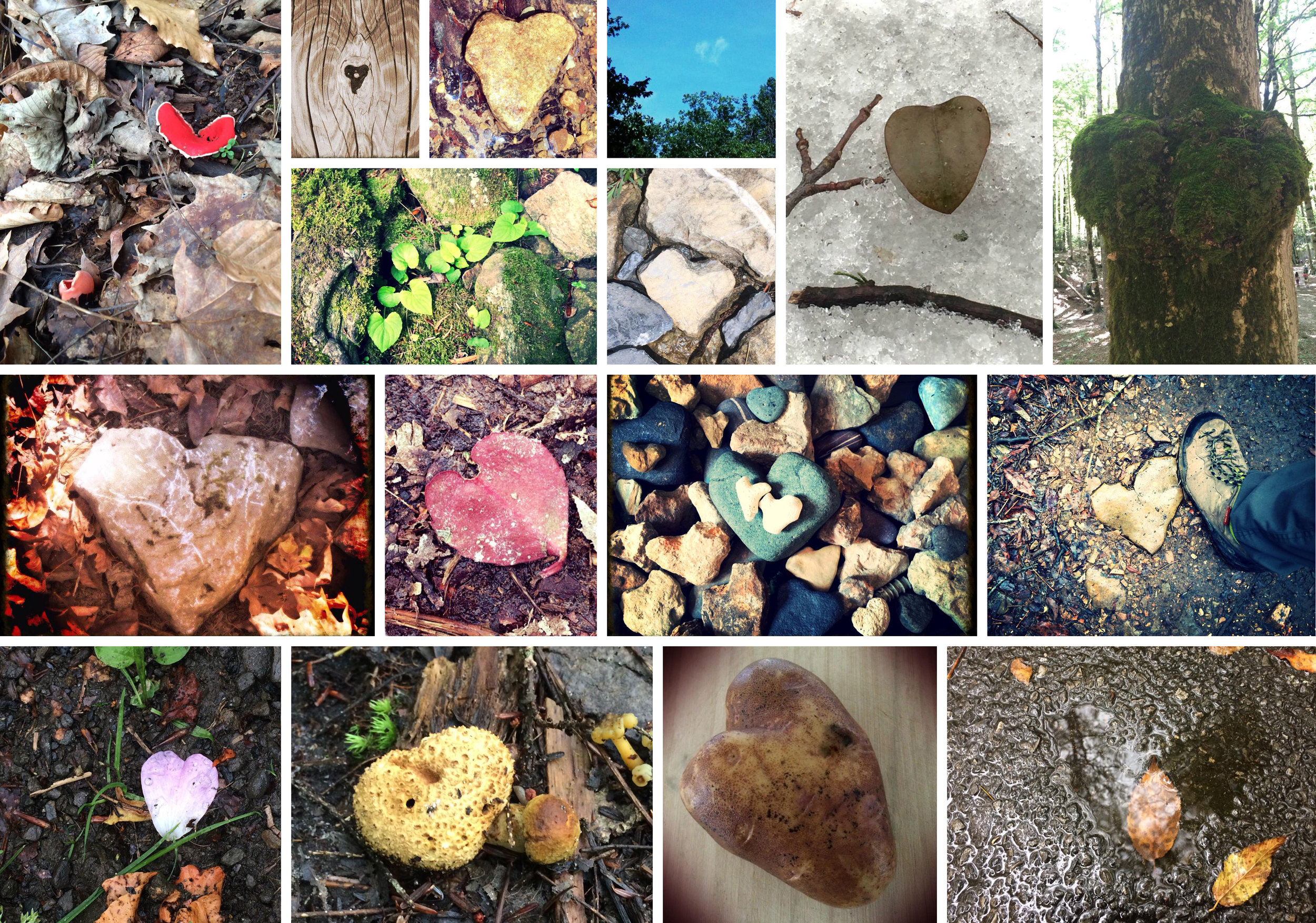 I have a habit of seeking out heart shapes wherever I go. Nature provides many examples!
