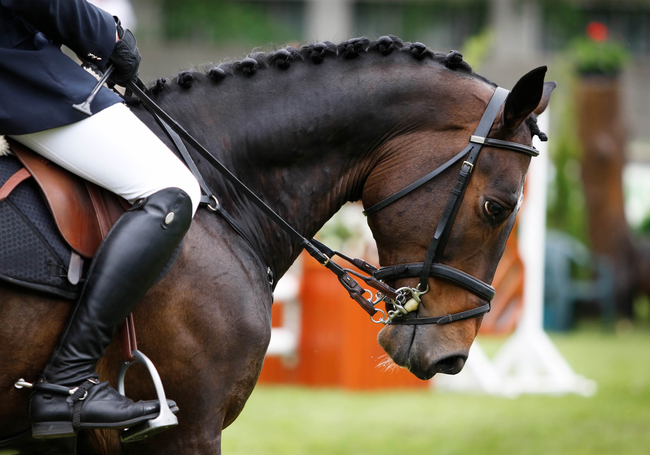 lois-morgan-equine-osteopathy.jpg