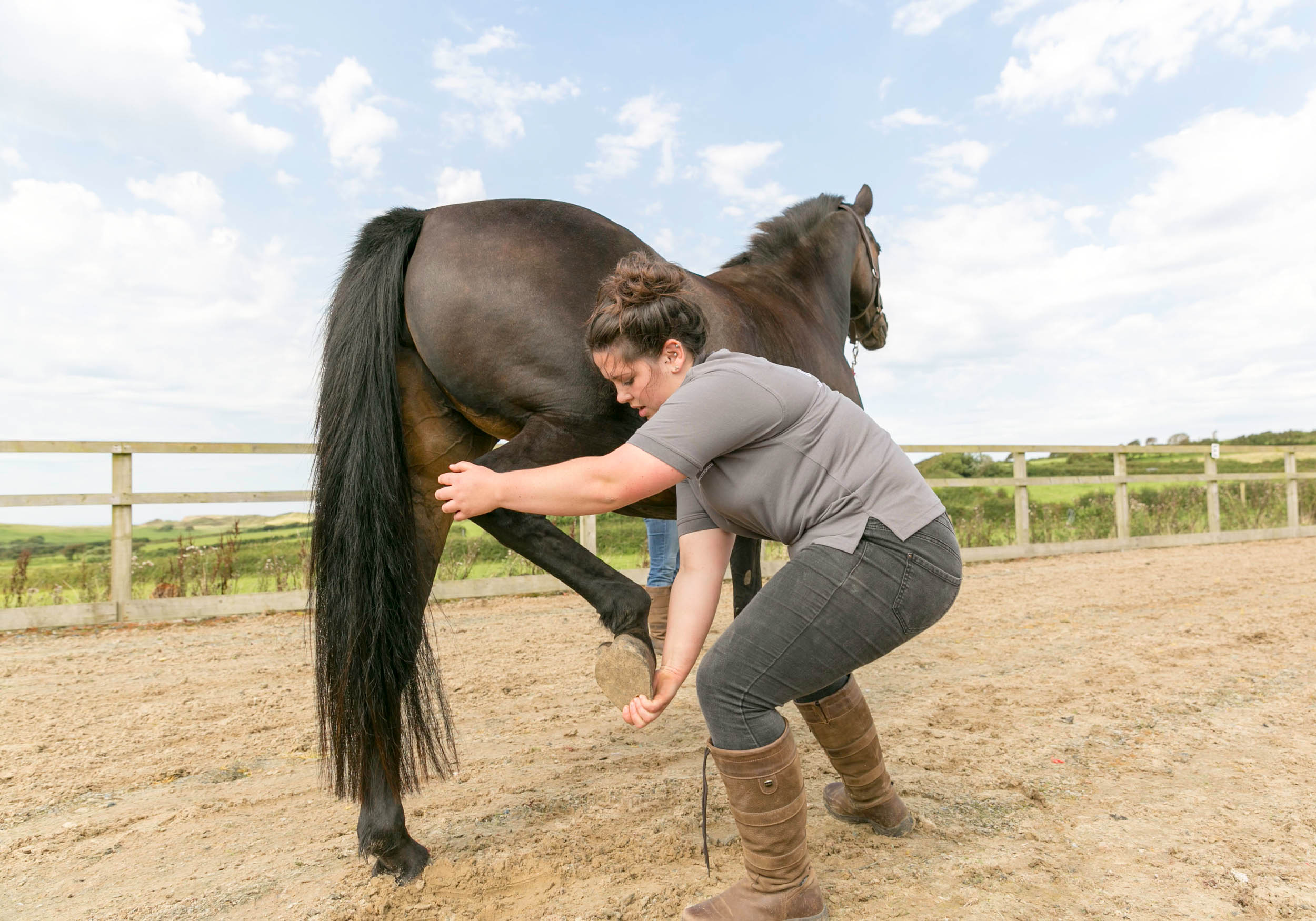 lois-morgan-equine-osteopath-swansea-gower