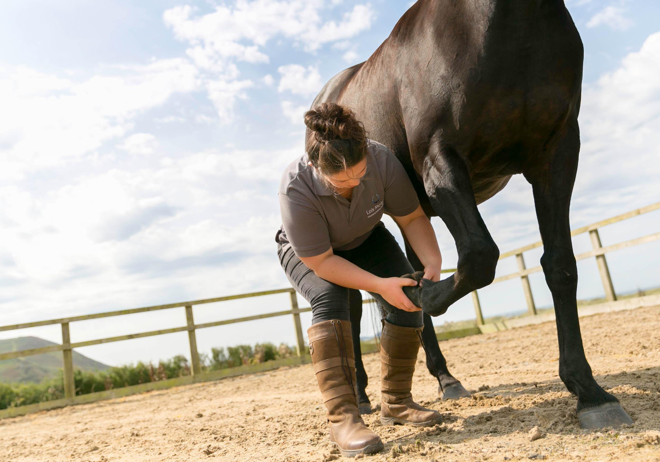 lois-morgan-equine-osteopath-carmarthenshire