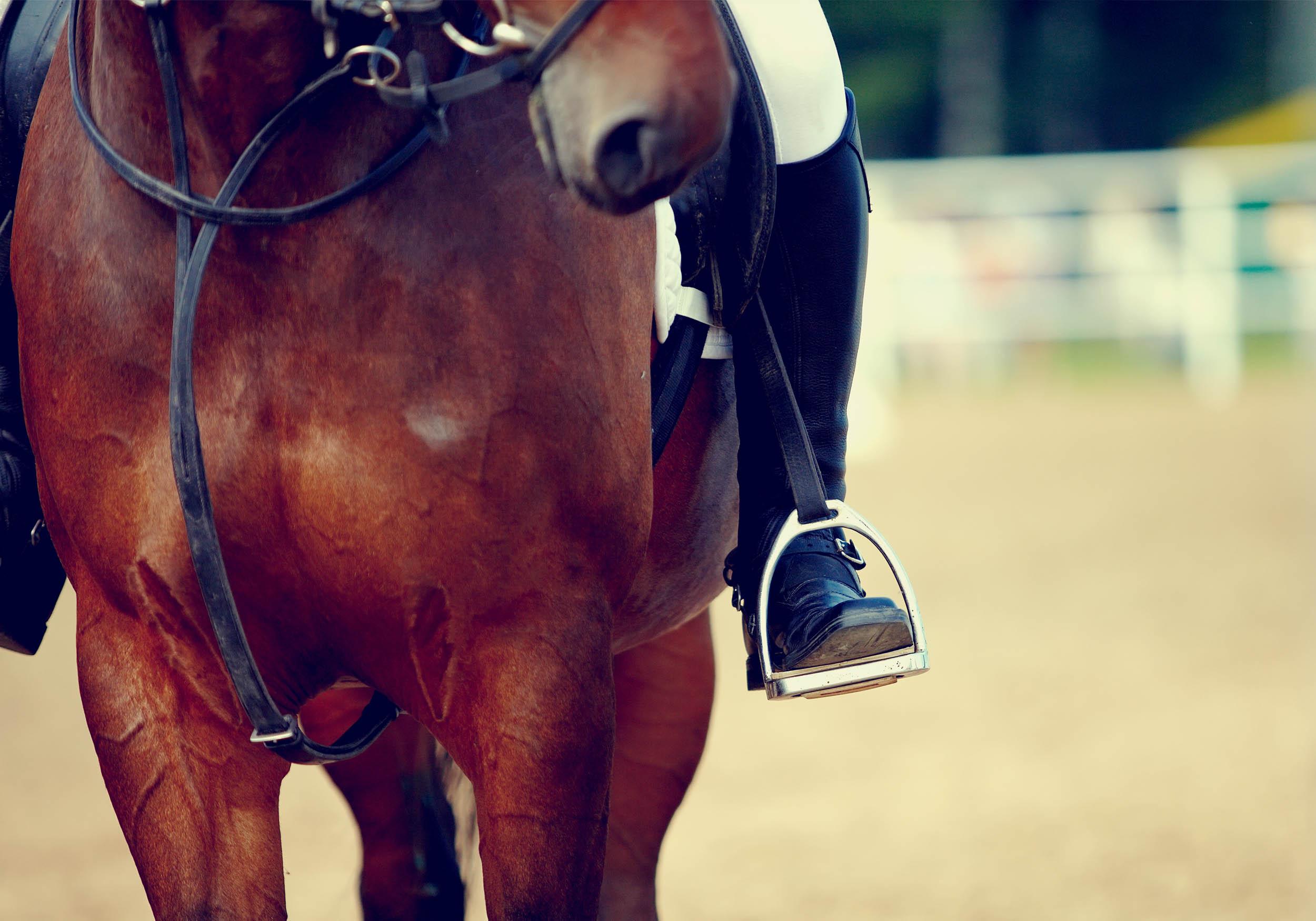 lois-morgan-equine-oseopath