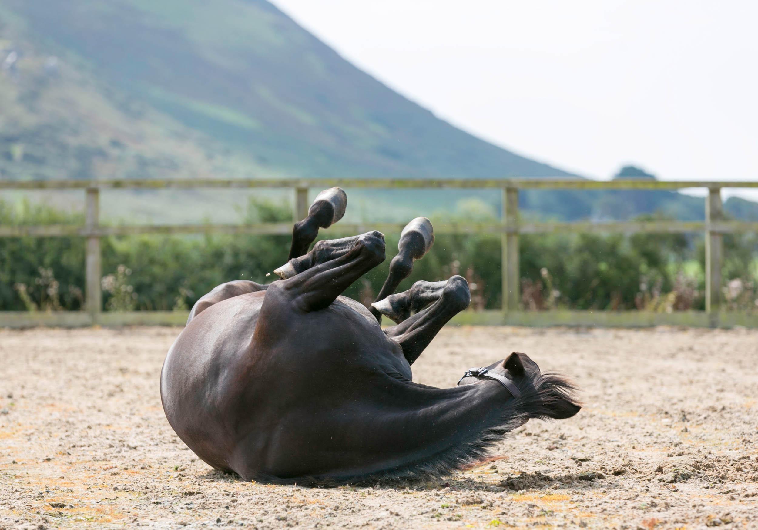 lois-morgan-equine-osteopath.swansea-gower.jpg