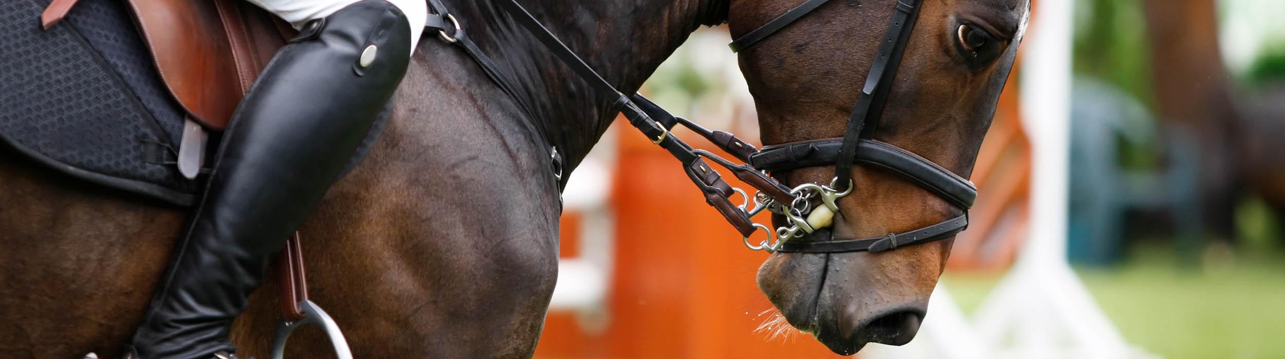 lois-morgan-equine-osteopath-swansea.jpg