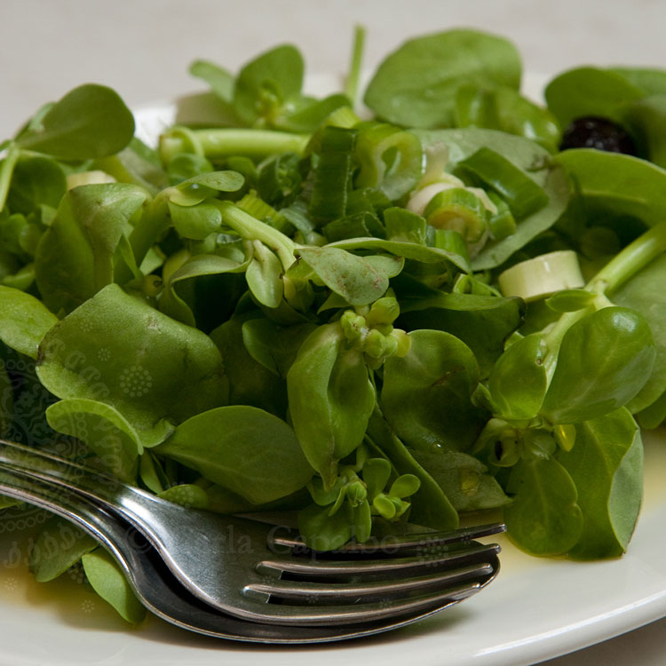 A Greek purslane salad