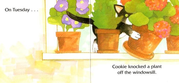 Cookie's Tuesday 1.jpg