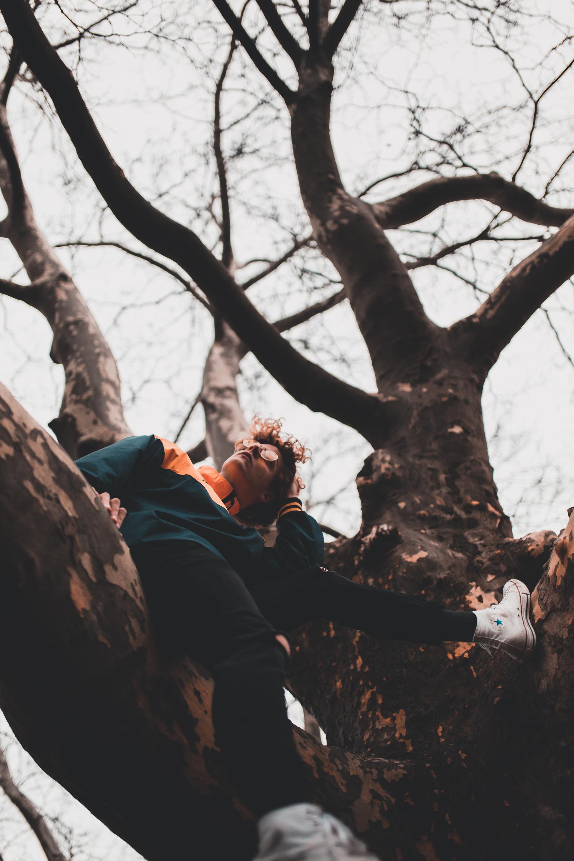 Jesse Is Tree 2.jpg