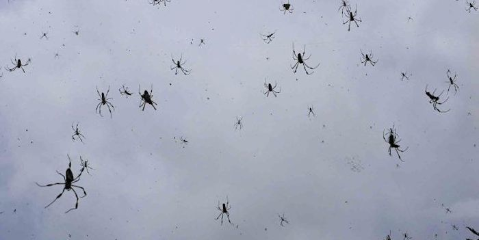 Spiders_elitedaily.jpg