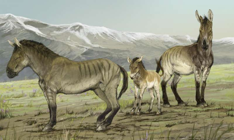 This illustration depicts a family of stilt-legged horses ( Haringtonhippus francisci ) in Yukon, Canada, during the last ice age. Credit: Jorge Blanco