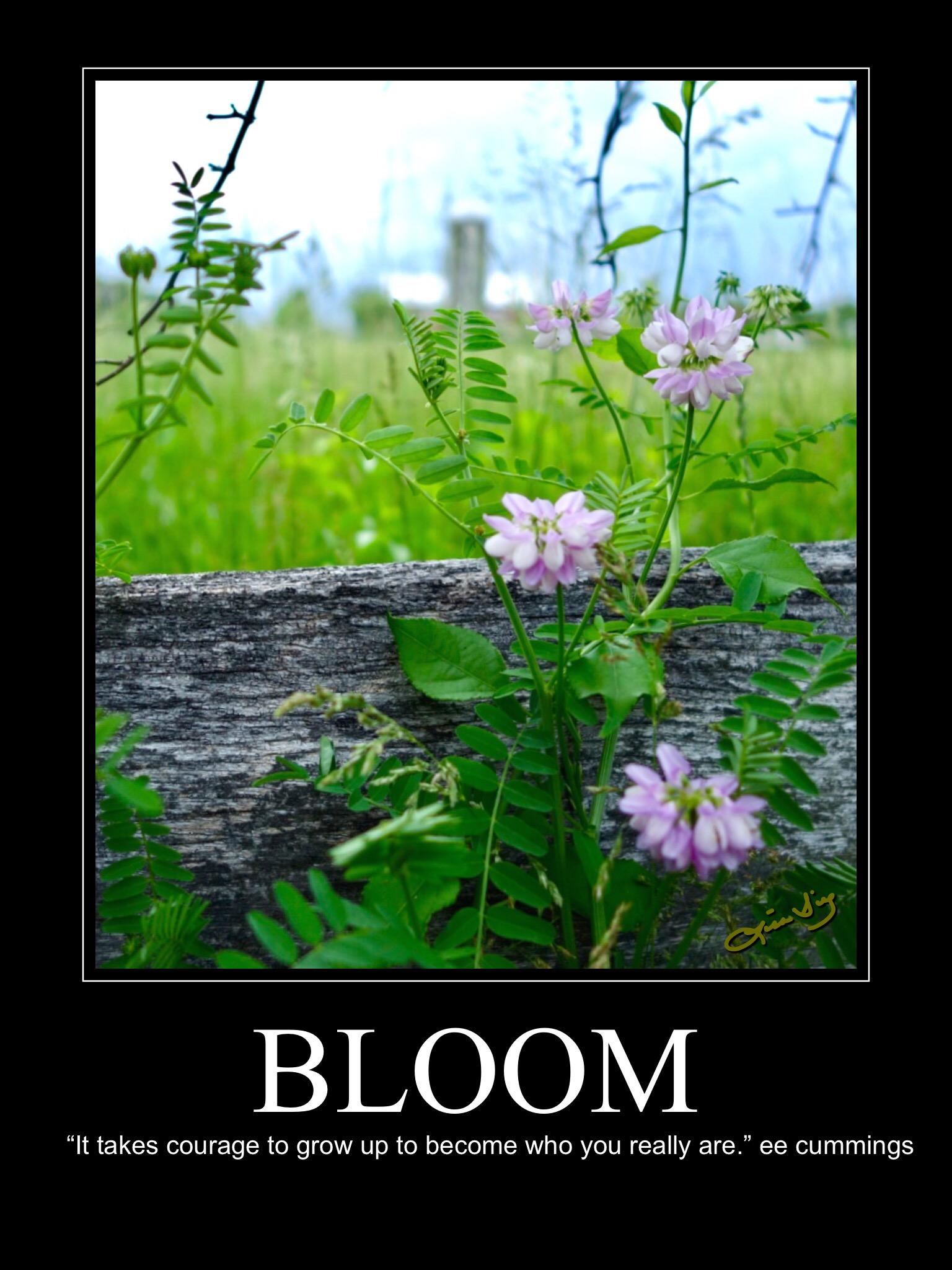 Bloom new poster.JPG