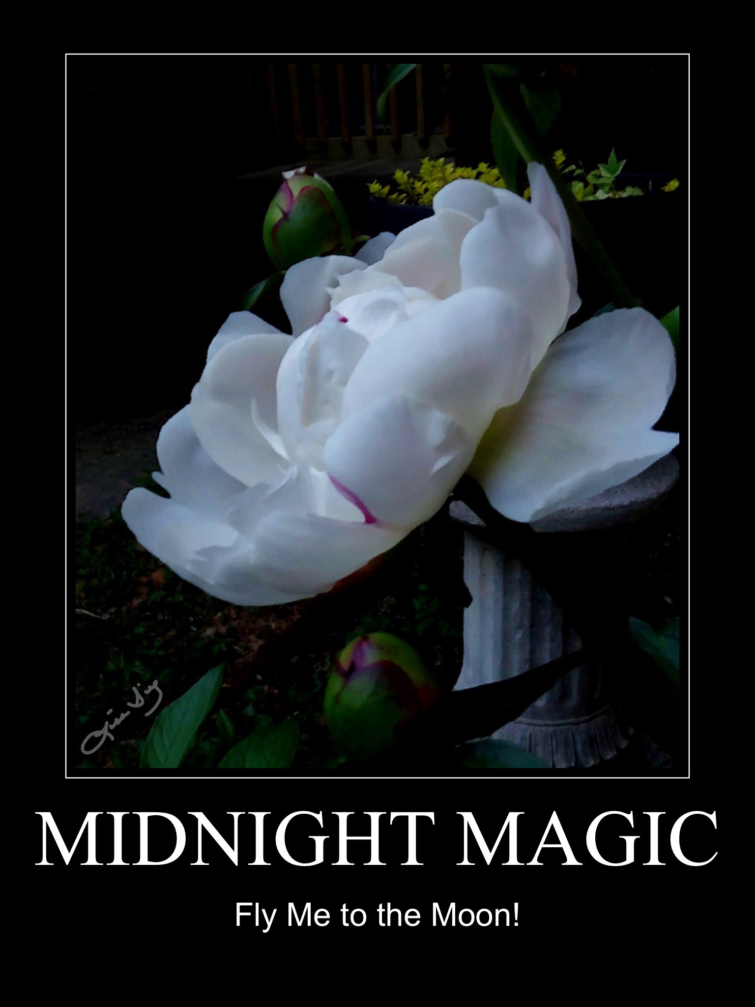 Midnight Magic poster.JPG