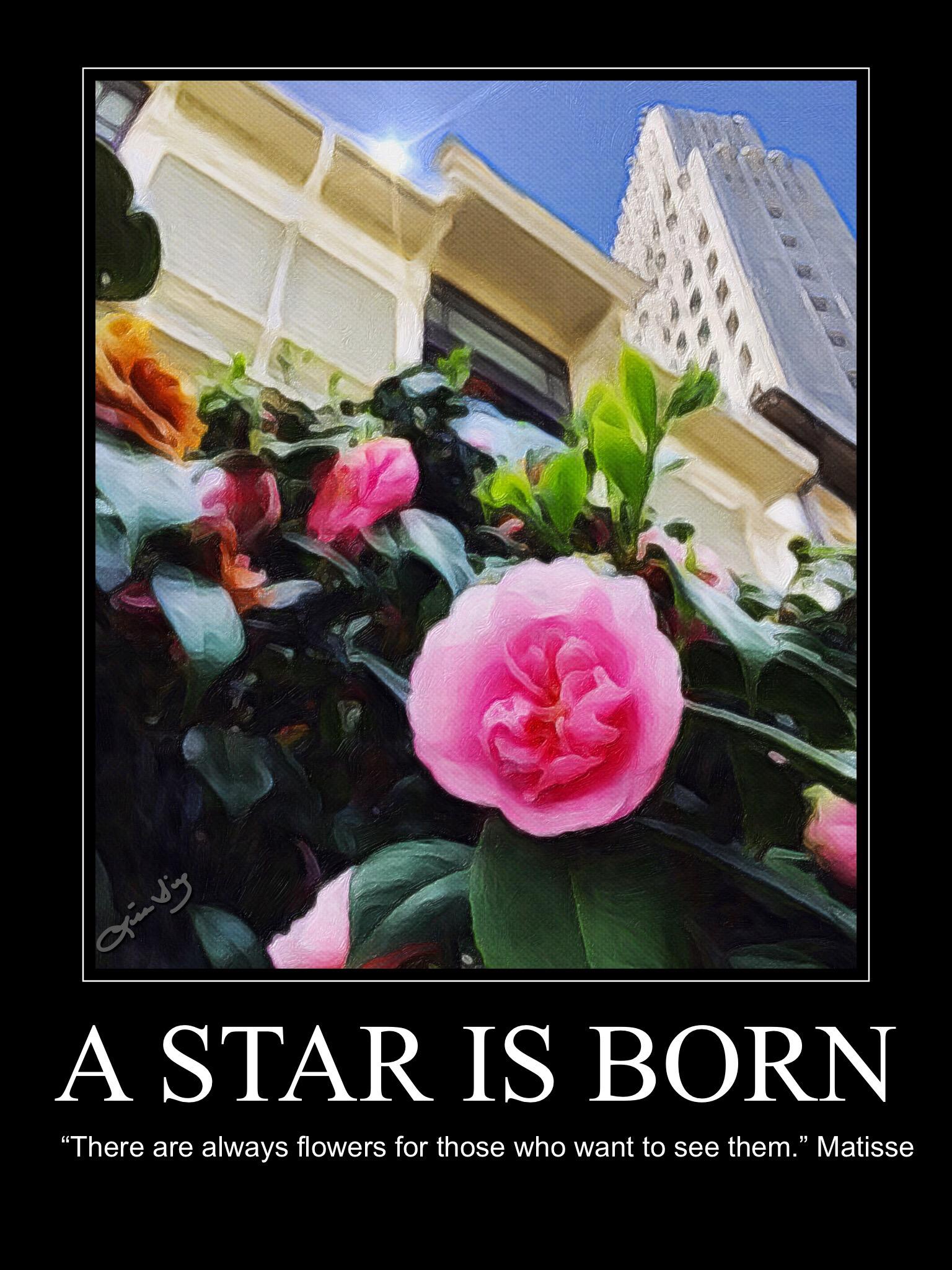 A star is born new.JPG