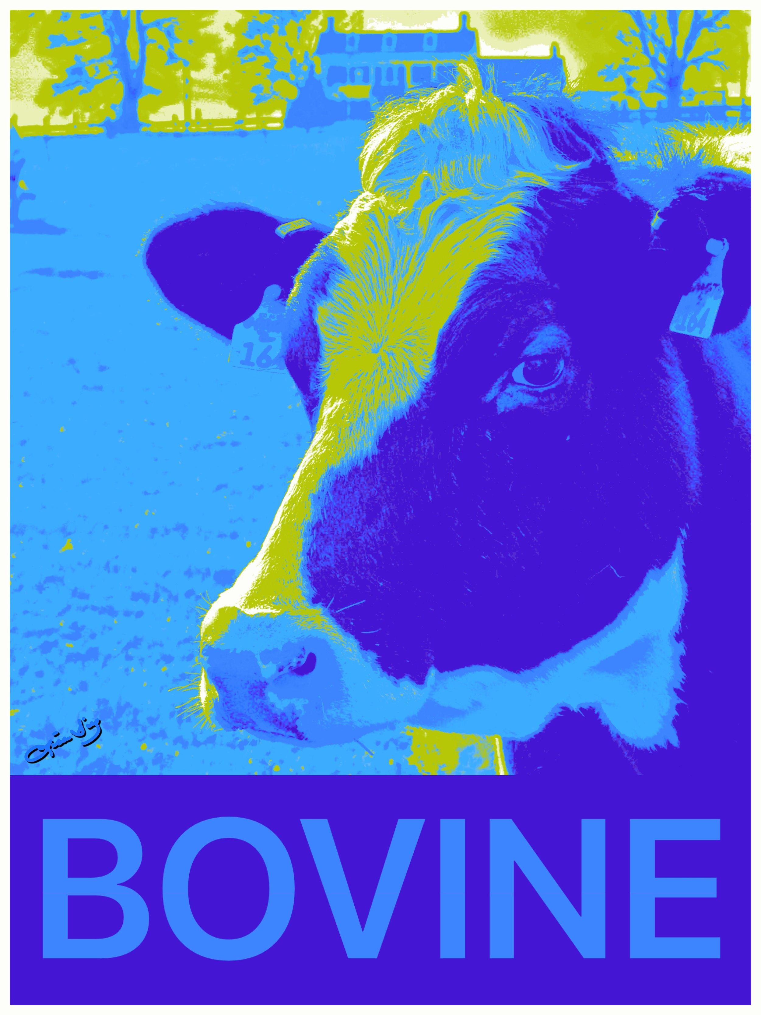 bovine poster 2.JPG