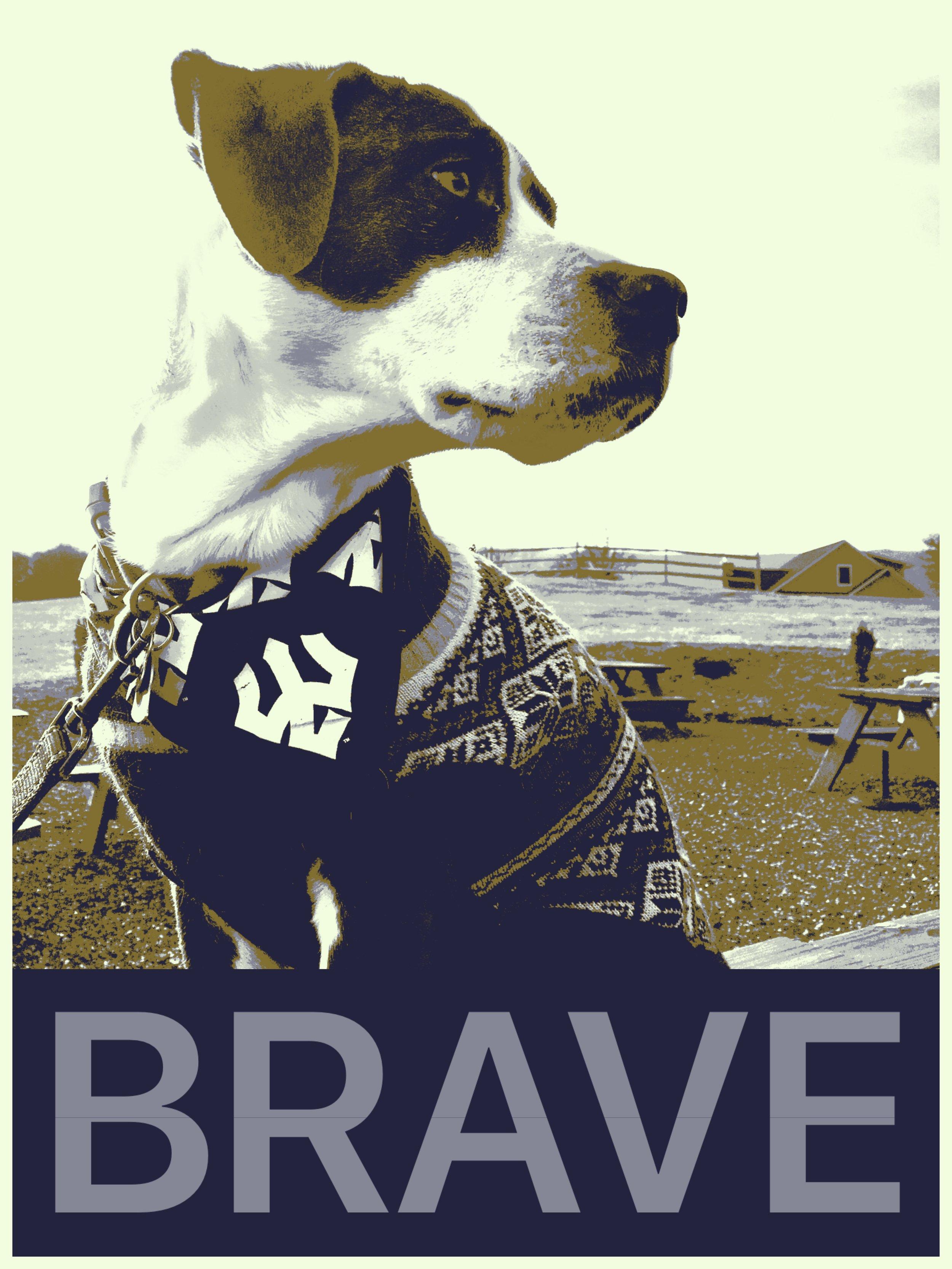 Layla Brave poster.JPG