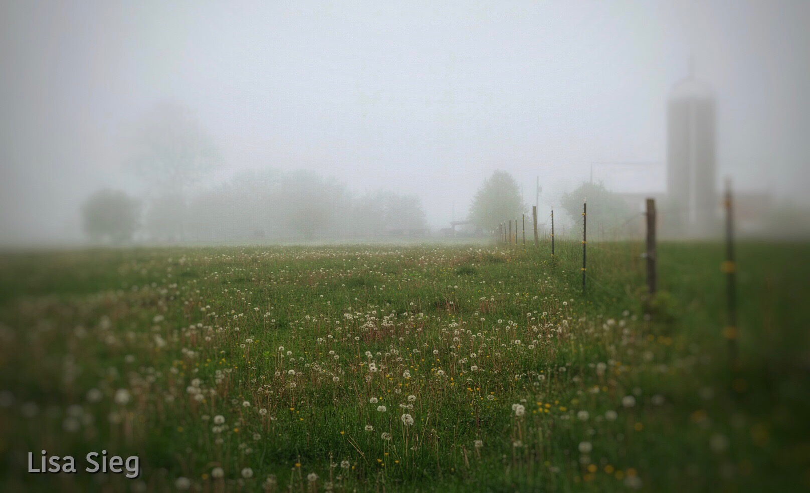 Misty Meadow