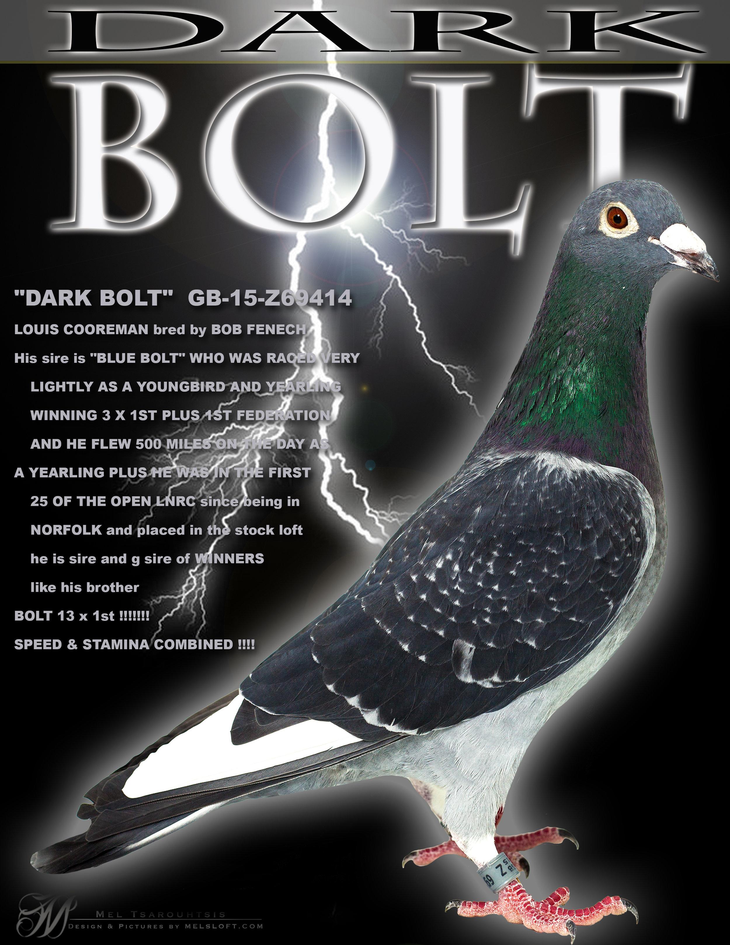 DARK BOLT copy.jpg