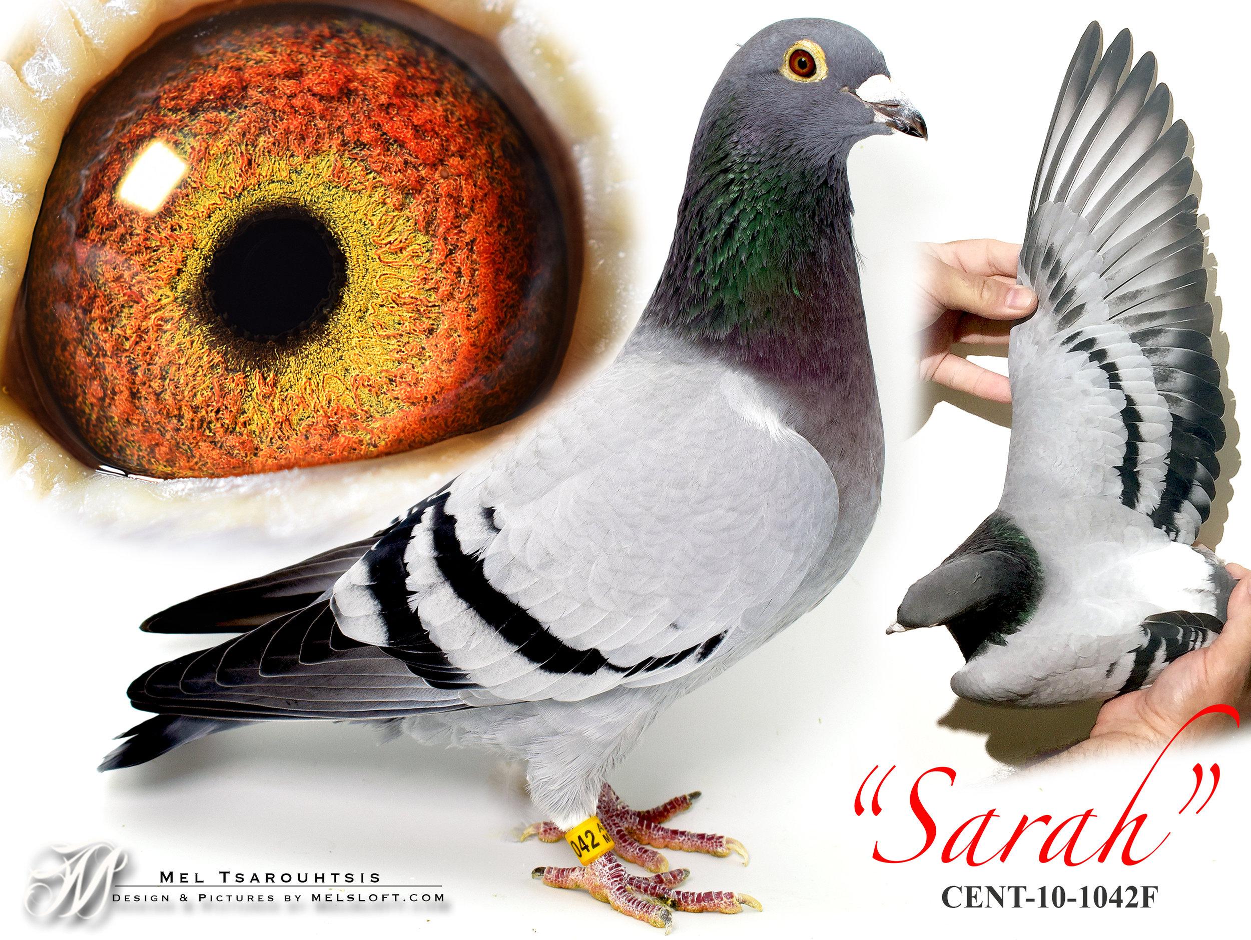 sarah 2 copy.jpg