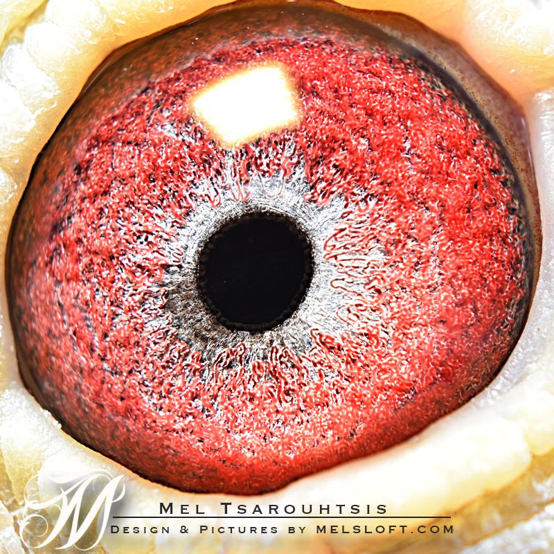 darth eye.jpg
