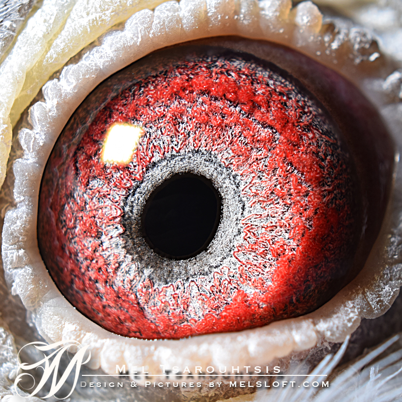 eye of blk Cyriel.jpg