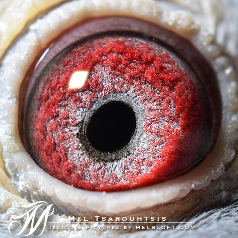 eye of blue sezanne.jpg