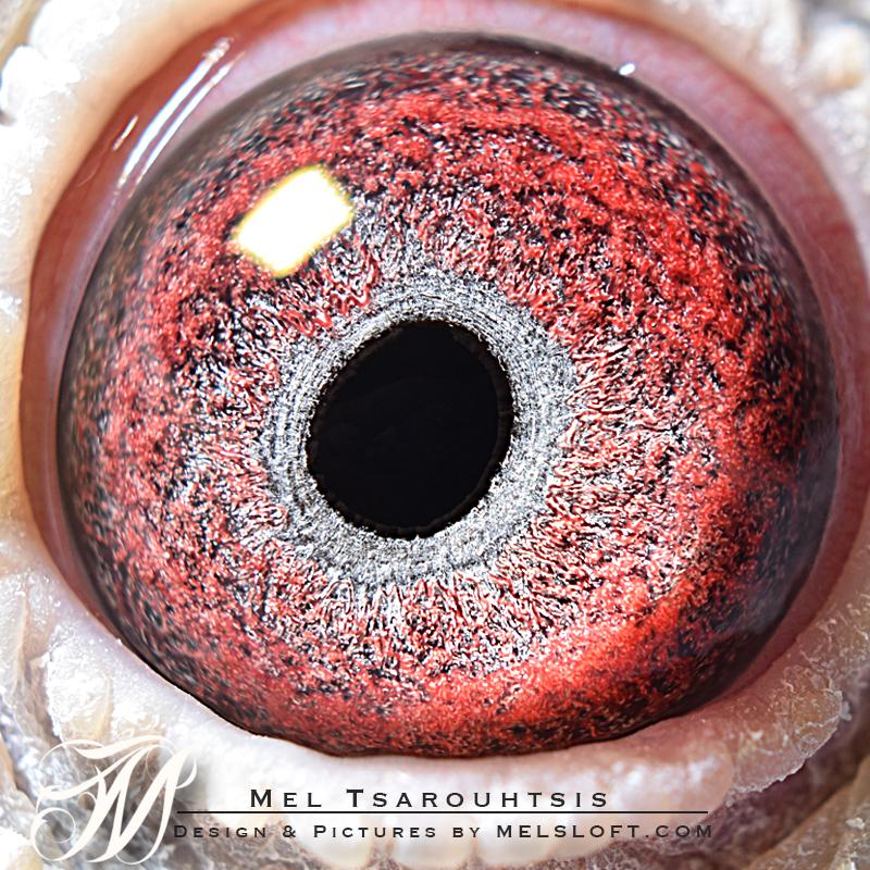 eye of LANCE.jpg