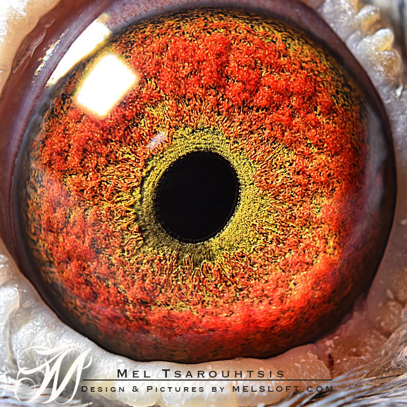 eye of kilos girl.jpg