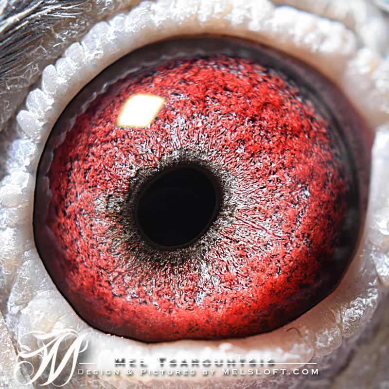 eye of miss secret.jpg