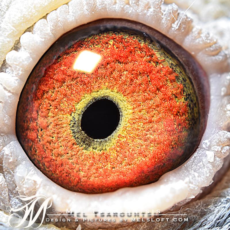 eye of mr secret.jpg