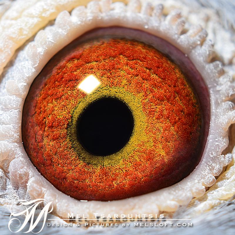 eye of sargent.jpg