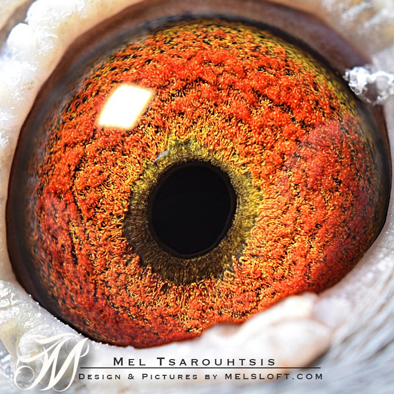 eye of nelsons girl.jpg