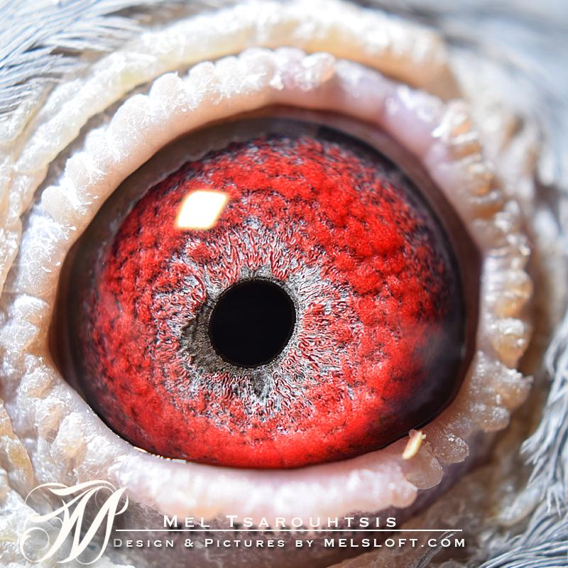 eye of shes tiny.jpg