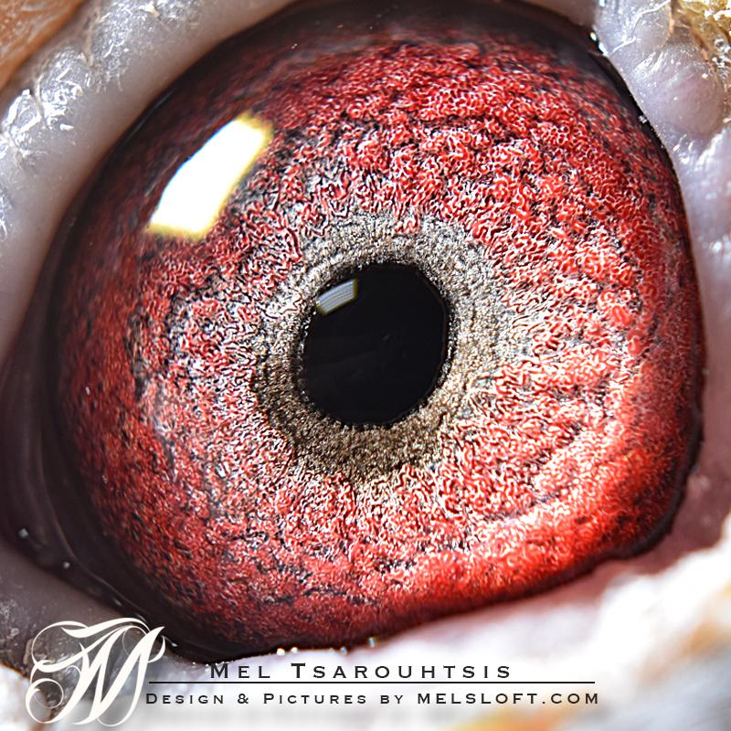 eye of super star.jpg