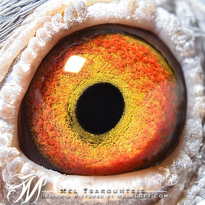 eye of tri tick.jpg
