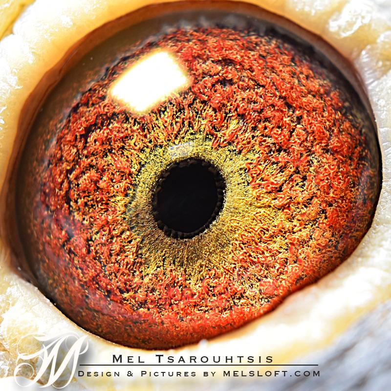 tri star eye.jpg