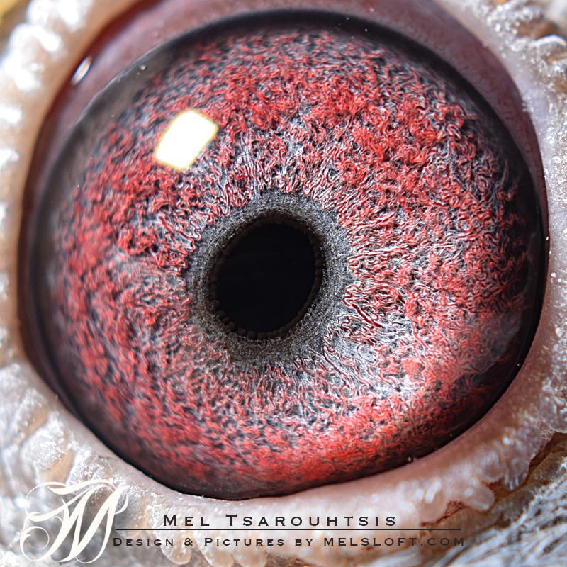 lile eye.jpg