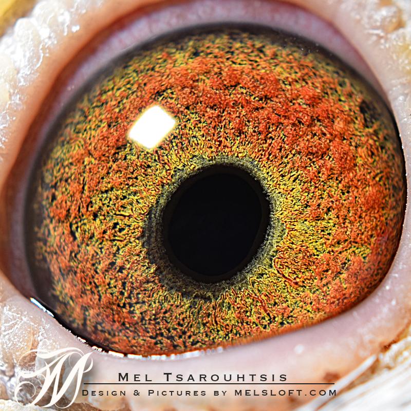 regina eye.jpg