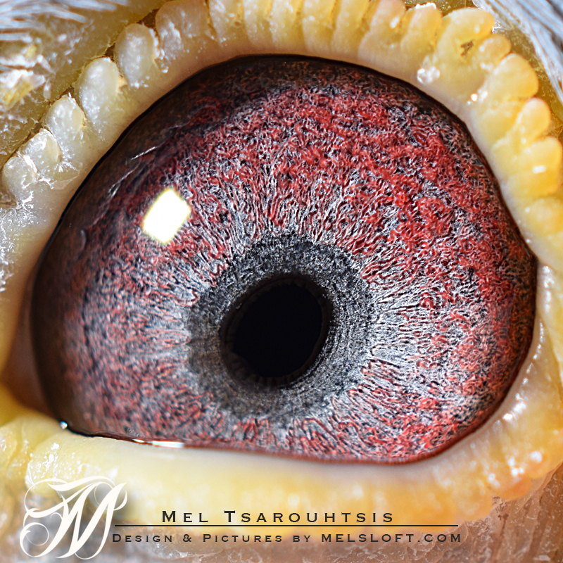 eye of 55 mtfl 2016.jpg
