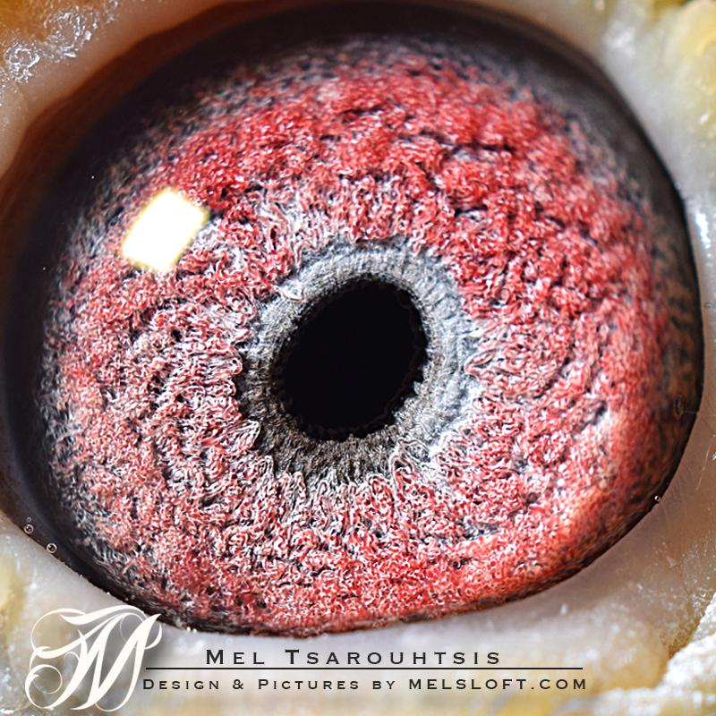 eye of conan.jpg