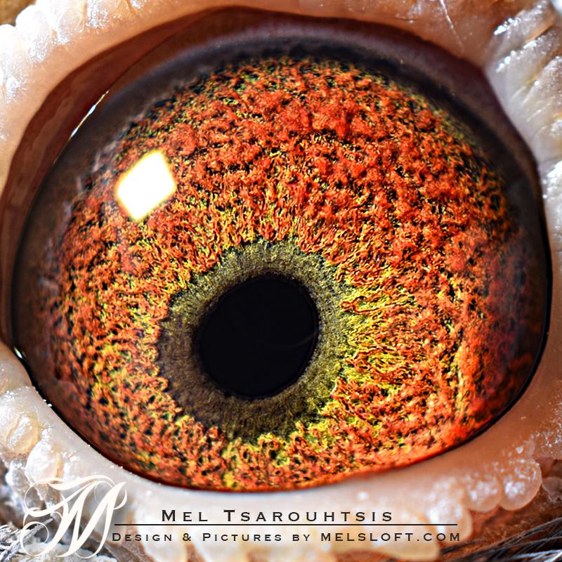 eye of GROTE LEP.jpg
